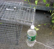 Bottle-and-string manual box trap