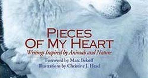 Pieces of My Heart by Jim Willis