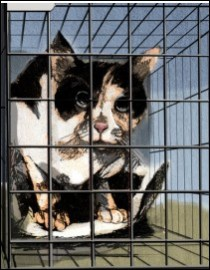 Cage behaviour - feral