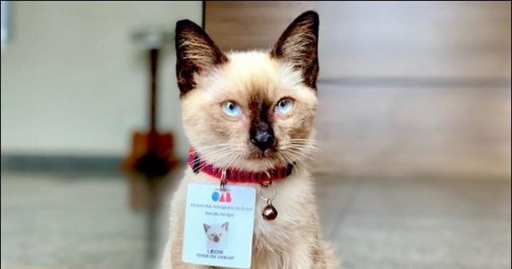 Dr Leon the Brazilian lawyer cat