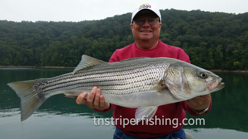 Guided fishing tour Captain Jay Girardot Premiere fishing guided tour to catch the biggest striper bass in Lake Cherokee and Lake Watts Bar in Tennessee