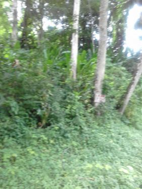 land for sale in central couva