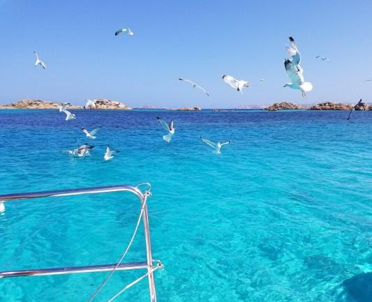 A group of seagulls in La Maddalena archipelago.