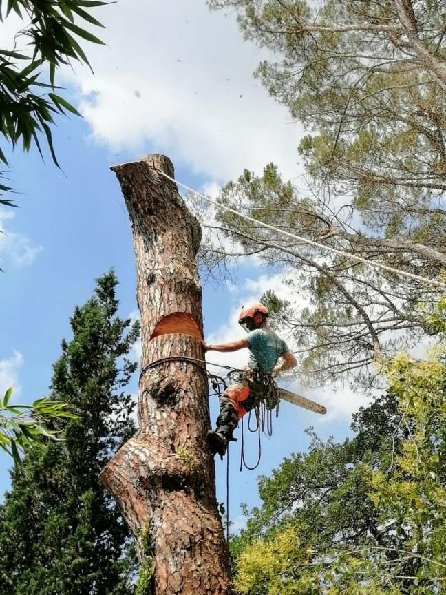 abbattimento alberi in treeclimbing