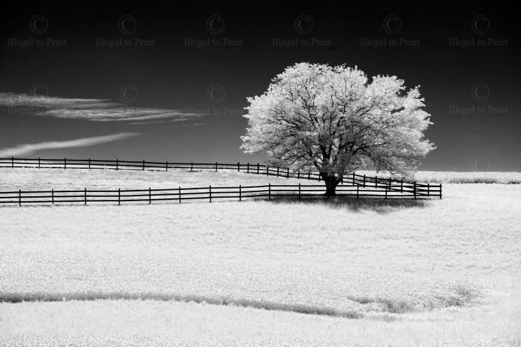 Fence&Tree6225