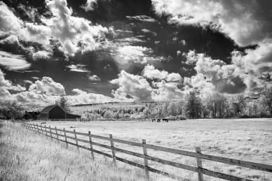 Horses&Barn6126