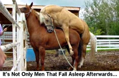 HORSE DO IT