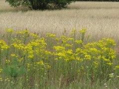 meadow3