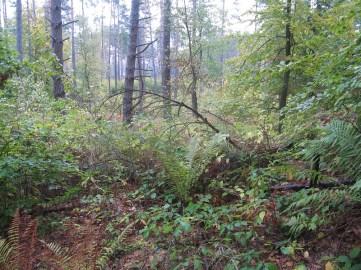 Pełno zwalonych drew, gałęzi, nie chodzi się tam łatwo