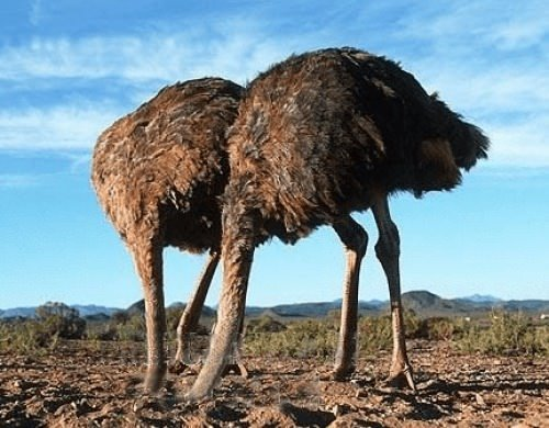 ostrich, appreciative inquiry, change management, Toby Elwin, blog