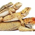 Best pet reptiles for children