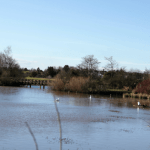 My Wild Ones // Swans, Stickmen & a very big pond