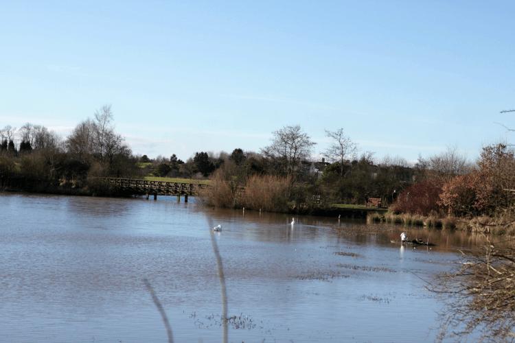 A very big pond