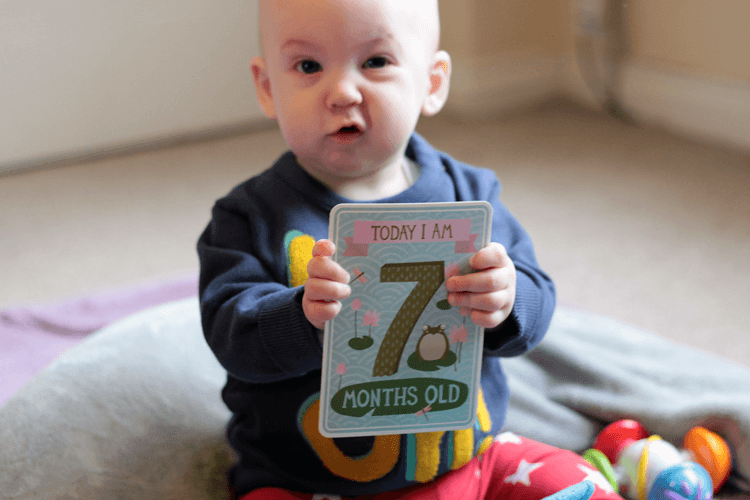 Today I am seven months old