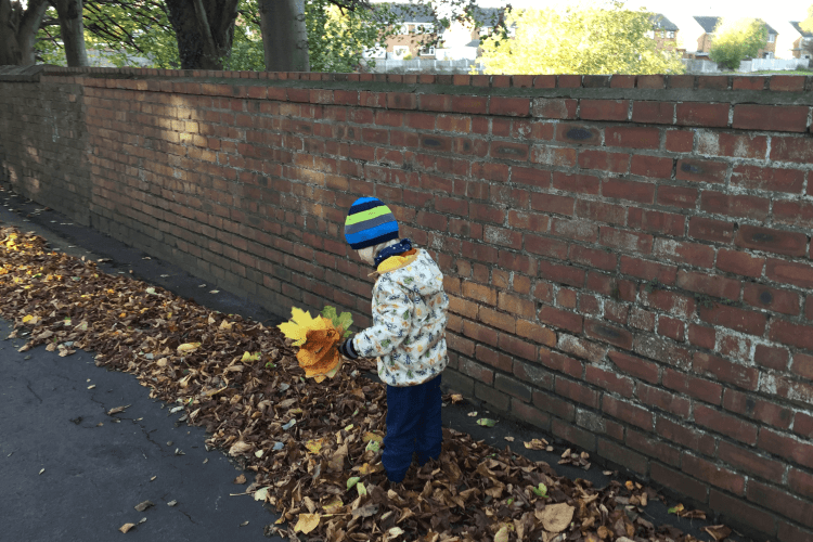 Toby enjoying collecting autumn leaves