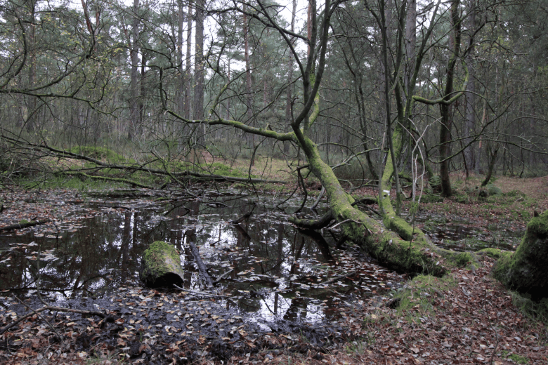 The Grumbletrog's favourite bathing pool - peat bog at Cliburn Moss