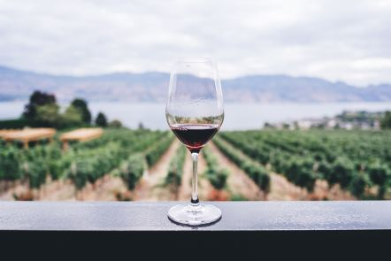 Wine glass in front of a vineyard