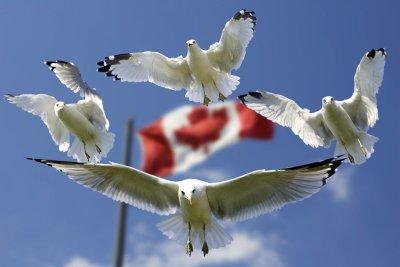 Как Зеленский съездил в Торонто — «столицу КанадЫ»