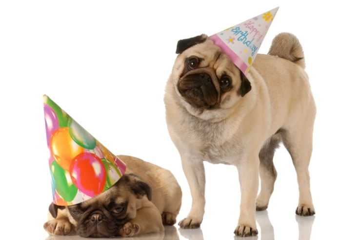 Pug-Party-3