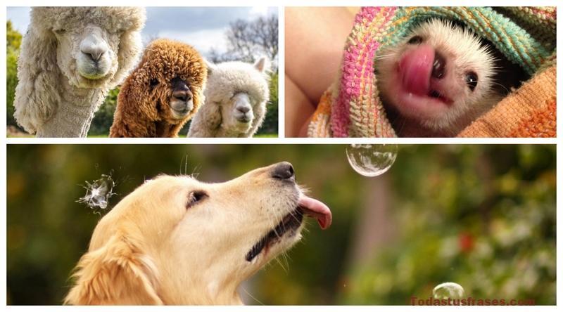 Fondos de pantalla de animales graciosos y divertidos