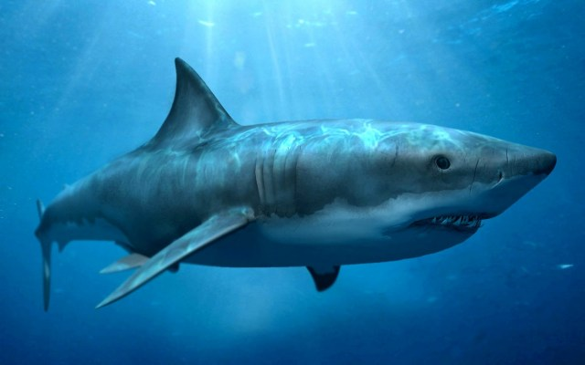 Fondos de pantalla de fauna marina en FullHD