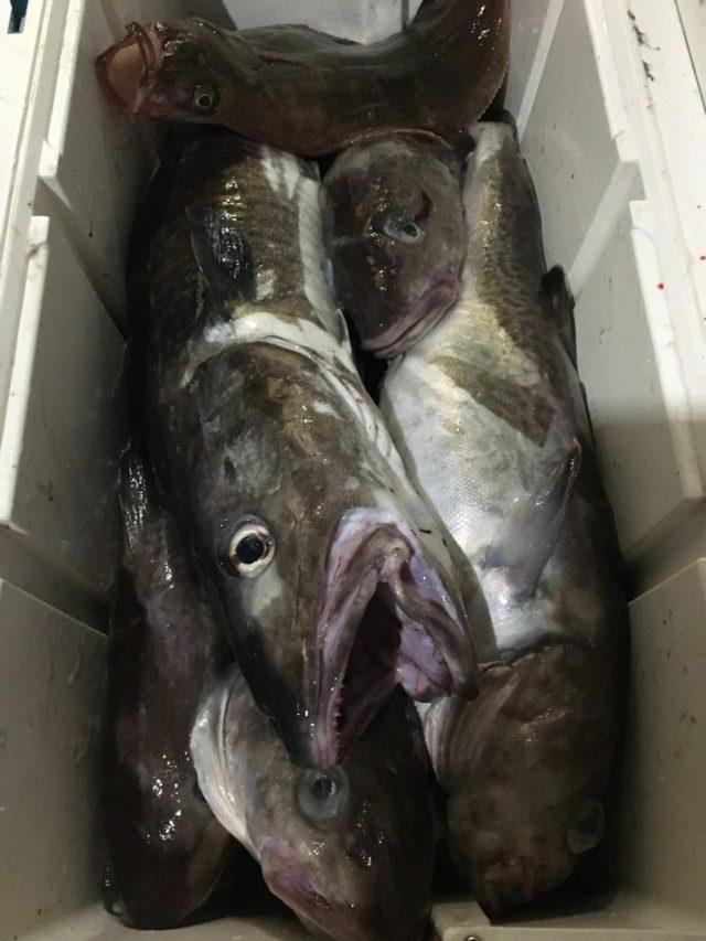 11/18 湯の尻からタラ釣りに行ってきました
