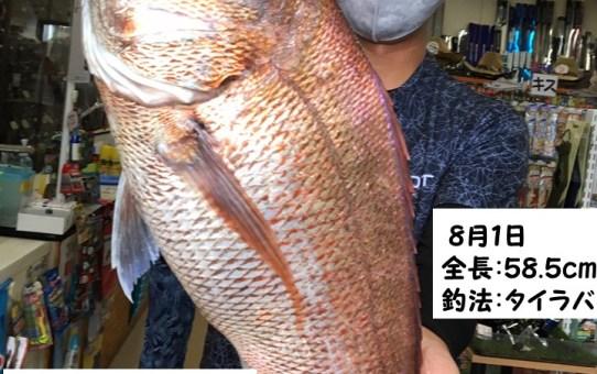 タイラバ真鯛釣果☆