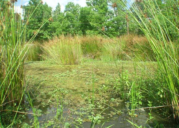 Farm Pond Weed Identification