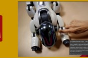 Japan Robots