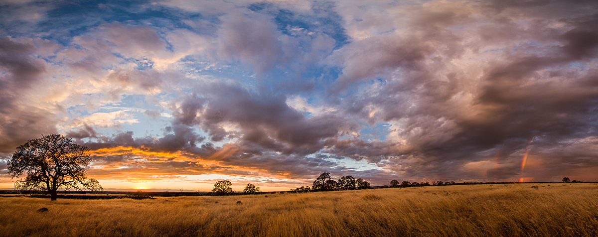 """Sunset, the Lone Oak, and a Rainbow"" by Owen Bettis"