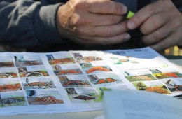 A man highlights a butterfly guide.