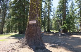 "Photo of ""Pacific Crest Trail north to Canada"" sign tacked onto a tree."
