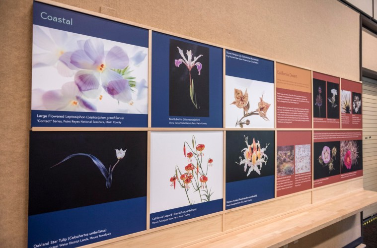 """One of the Gateway Science Museum's new exhibits, """"Beauty and The Beast: California Wildflowers and Climate Change,"""" will be on display in the Newberry Gallery through summer 2019."""