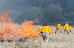 Chico State students from a Conservation and Restoration class learn about fire management at the Big Chico Creek Ecological Reserve.