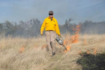 A student walks with a drip torch lighting off fire in a dry field.