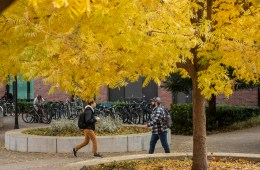 Students walk past ginkgo trees in front of the Student Services Center