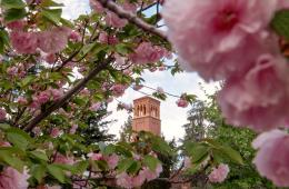 The Trinity Hall bell tower is seen through a burst of pink petals and bright greenery.