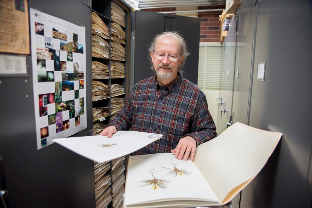 Lawrence Janeway looks through pages of pressed specimens.