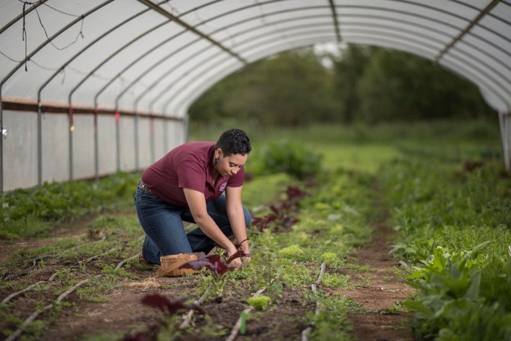 Kaeli McCarther works in an vegetable patch.
