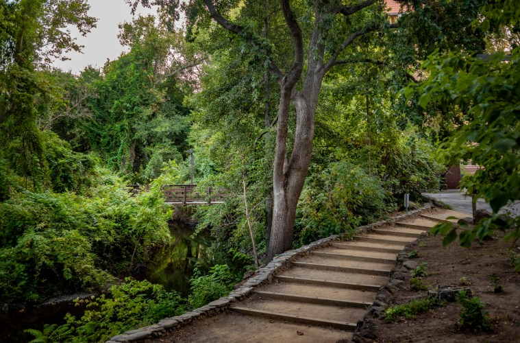 Trees line a footpath with steps that lead to a creek.