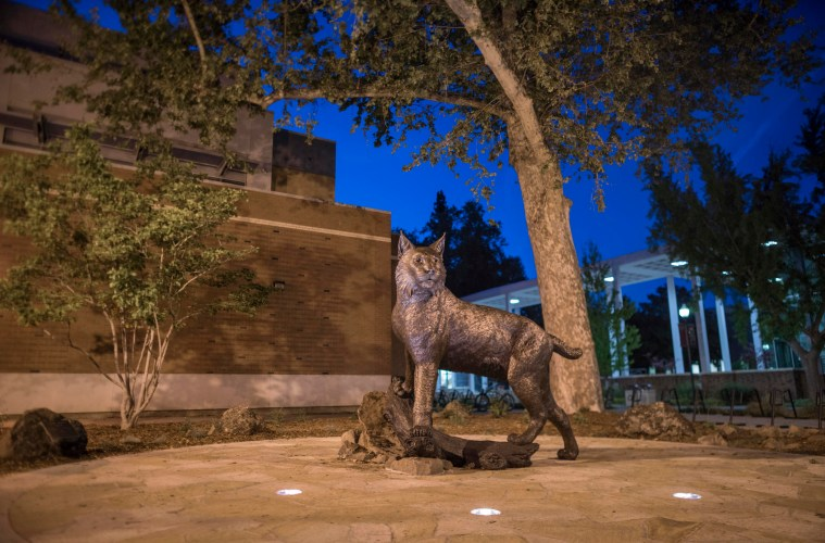 A bronze statue of a wildcat stands proudly as the sun sets in the distance.