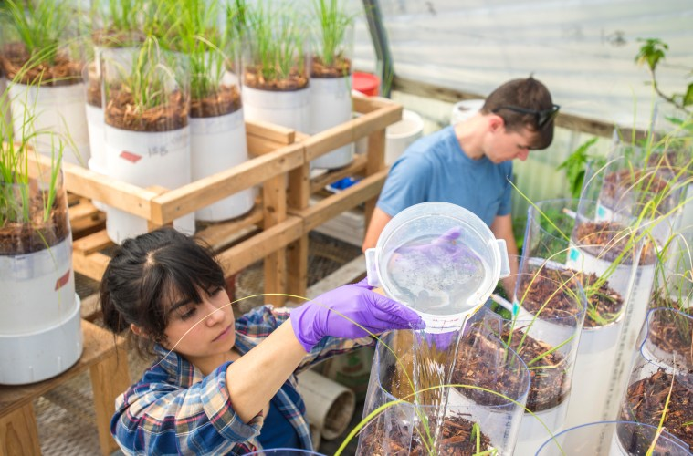 Students water plants in a greenhouse.