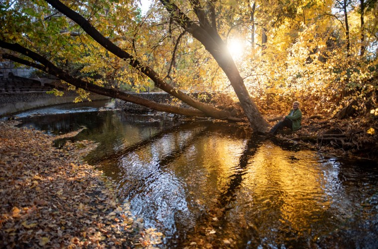 The sun filters golden light through the trees along the bank of Big Chico Creek.