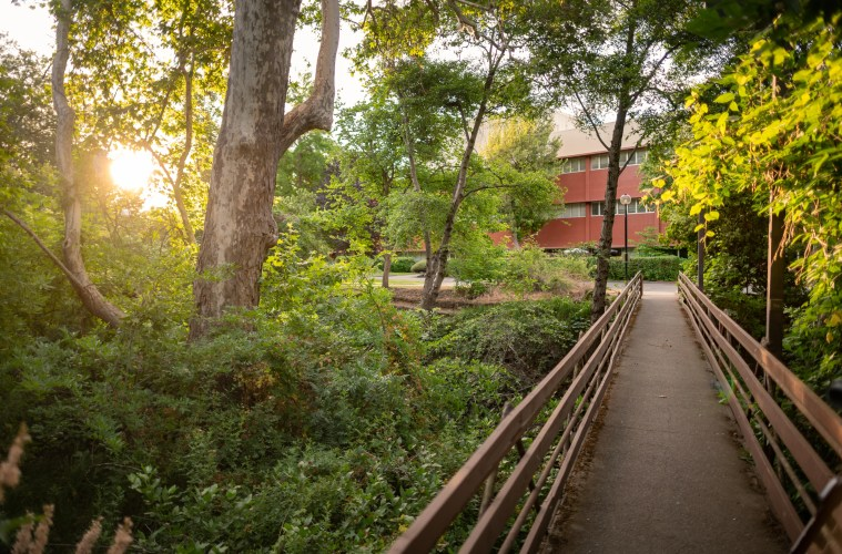 A pedestrian bridge with lush and thick trees and bushes on both sides lead to an academic building.