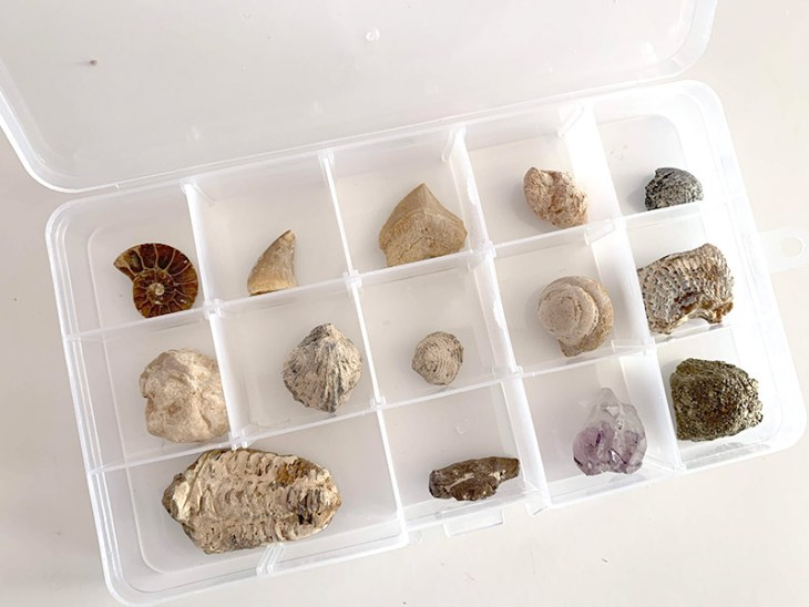 National Geographic Mega Fossil Dig Kit and plastic divided containers.