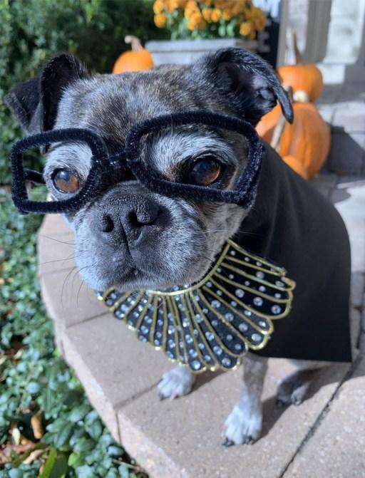 Ruth Bader Ginsburg Dog Costume