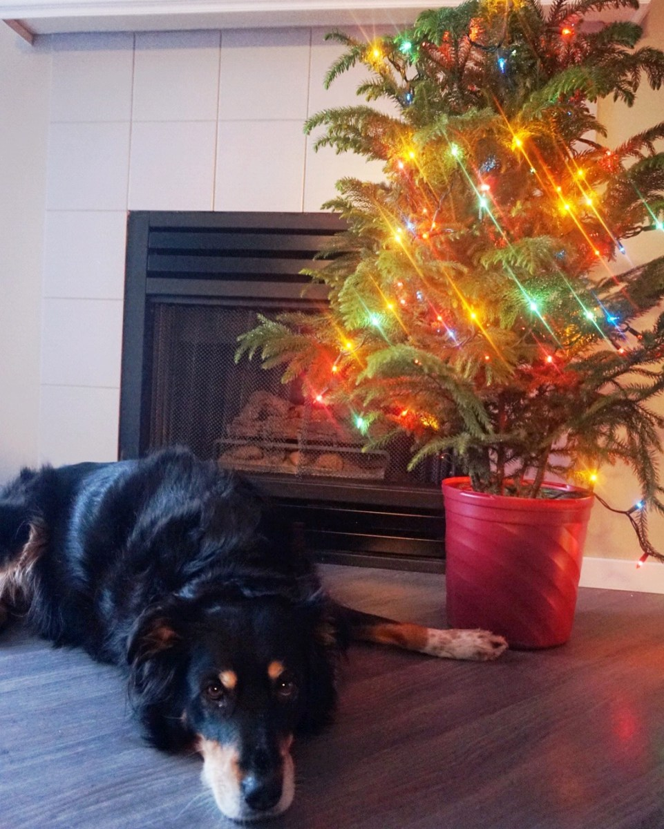 Lucy Tree
