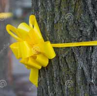 Tie a Yellow Ribbon for the Five, A Call from Nicaragua