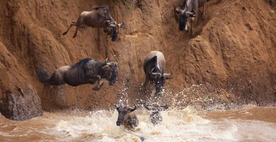 wildebeest1-e1380869988300
