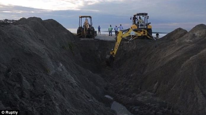 Heavy equipment necessary: Excavators and a bulldozer were brought in to ensure the whale was buried properly Read more: http://www.dailymail.co.uk/travel/travel_news/article-2837808/Nicaraguans-bury-beached-blue-whale-washed-ashore-Friday.html#ixzz3JMSSdAO6 Follow us: @MailOnline on Twitter | DailyMail on Facebook